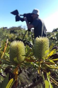 """Camera Mark Leonardi, """"Gardening Australia"""" 2016"""