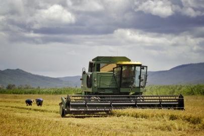 """Inspecting the rice harvest, Mackay Queensland. """"Landline"""" 2016"""