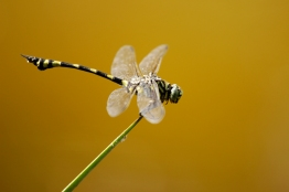 Dragonfly Moment 2015
