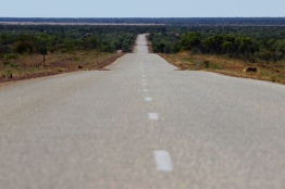 """The Stuart Highway, """"What's Up Down Under"""", 2016"""